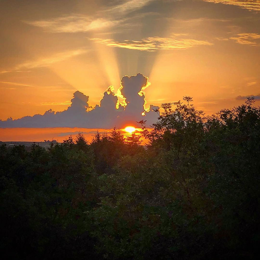 Photo showing a sunset in above a forest.