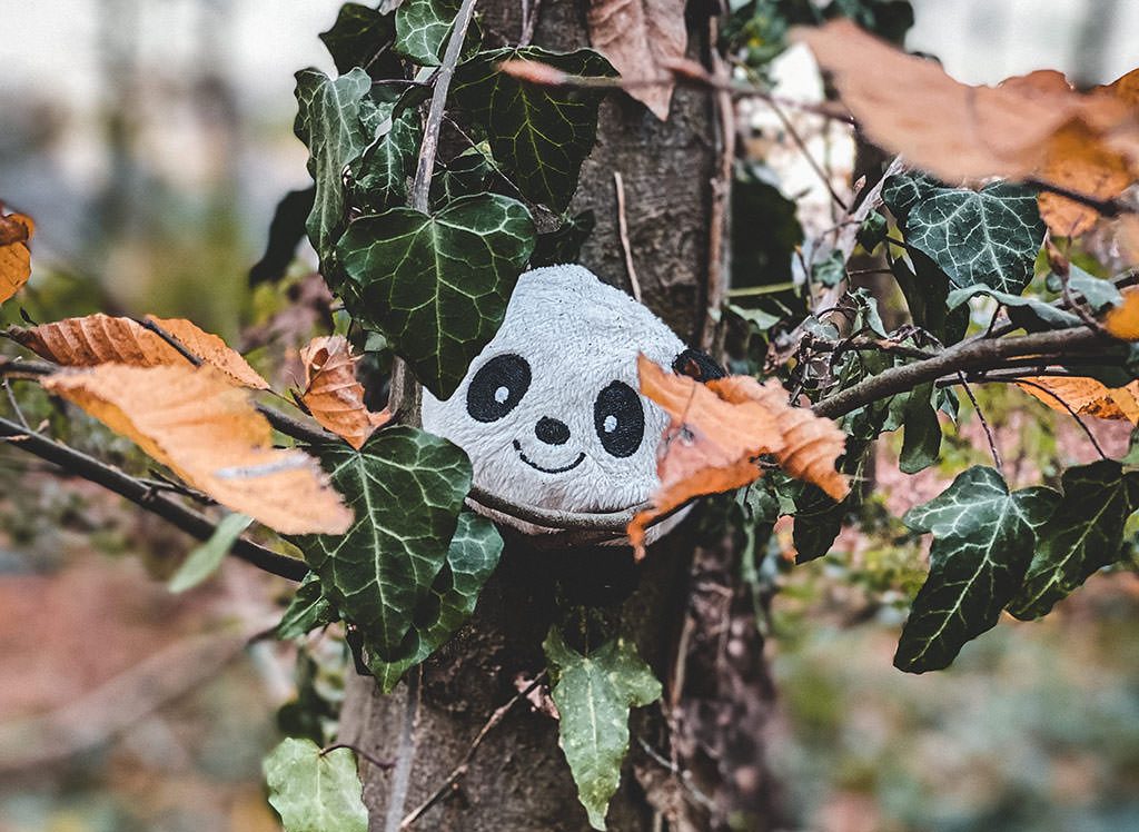 A photo I took in the morning, showing a cuddle toy panda placed on a tree in our forest.